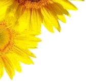 Deko: Sonnenblume content oben links